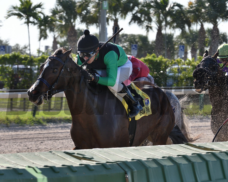 Quijote wins the 2017 Millions Sprint Preview Stakes<br /> Coglianese Photos/Lauren King