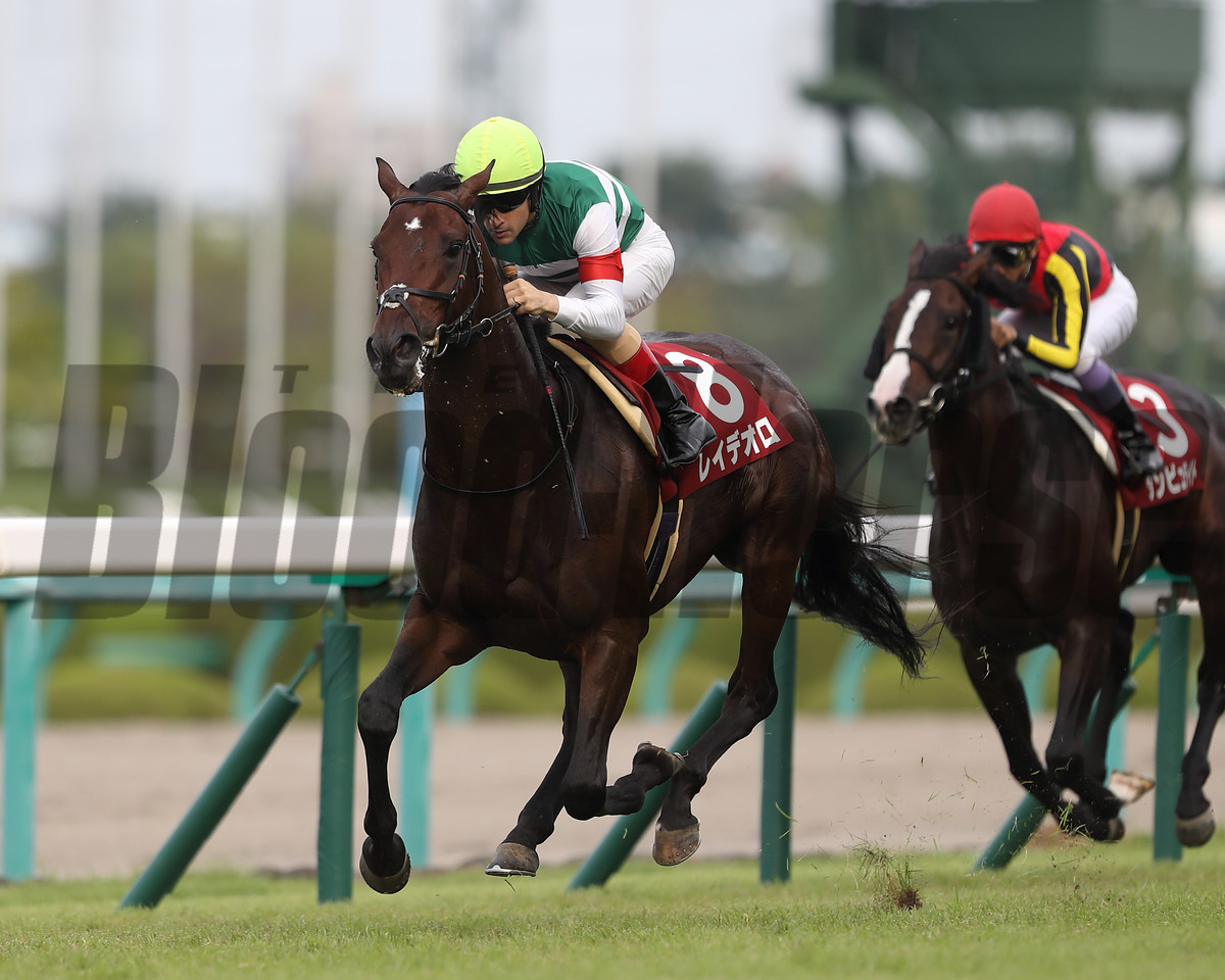today's Kikka Sho (JPN St Leger) Trial Kobe Shimbun Hai Grade 2.<br /> The winner is the JPN Derby winner Rey de Oro that is  his first race since the big result in Spring.