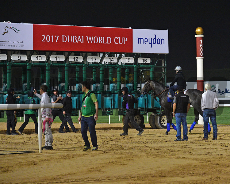 Dubai World Cup -Morning works 3/23/17, photo by Mathea Kelley/Dubai Racing Club   Arrogate, Dubai World Cup