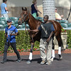 Eragon - Gulfstream Park, January 26, 2017<br /> Coglianese Photos