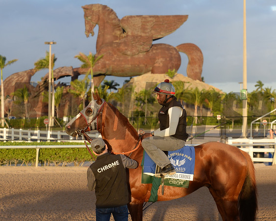 California Chrome - Gulfstream January 14, 2017<br /> Coglianese Photos/Kenny Martin