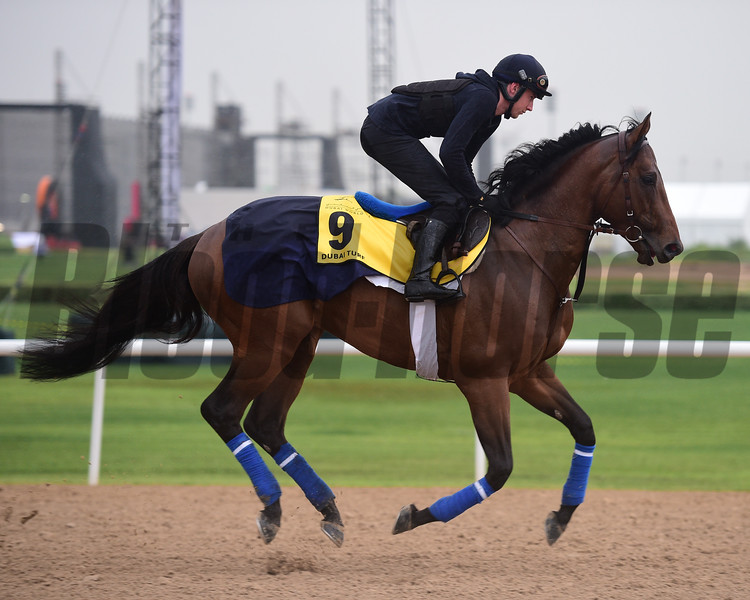 Dubai World Cup -Morning works 3/22/17, photo by Mathea Kelley/Dubai Racing Club<br /> Heshem, Dubai Turf