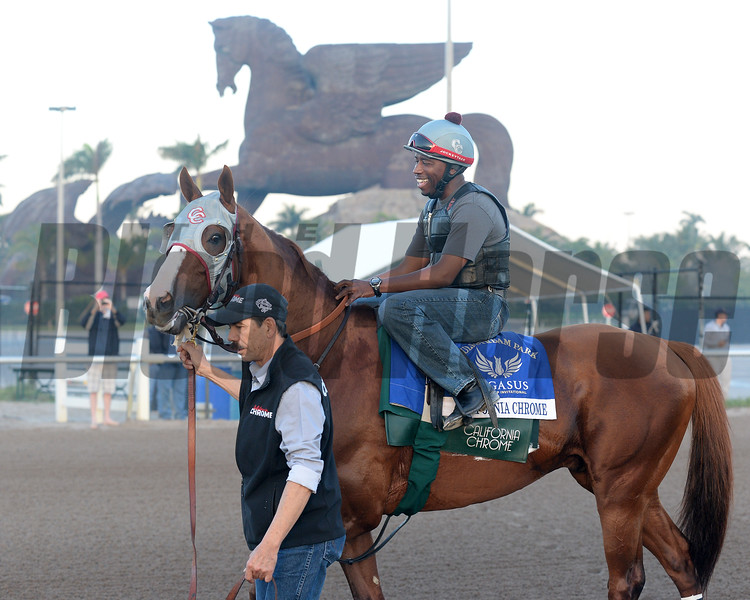 California Chrome - Gulfstream Park, January 21, 2017<br /> Coglianese Photos/Kenny Martin