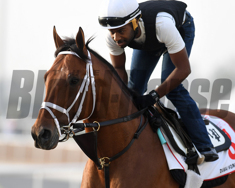 Dubai World Cup -Morning works 3/22/17, photo by Mathea Kelley/Dubai Racing Club<br /> Keen Ice, Dubai World Cup