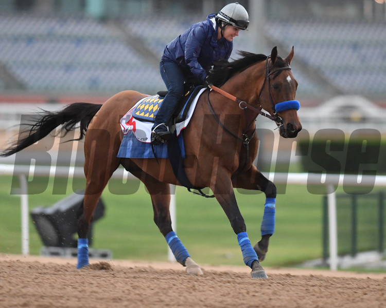 Dubai World Cup -Morning works 3/24/17, photo by Mathea Kelley/Dubai Racing Club<br /> Hoppertunity, Dubai World Cup