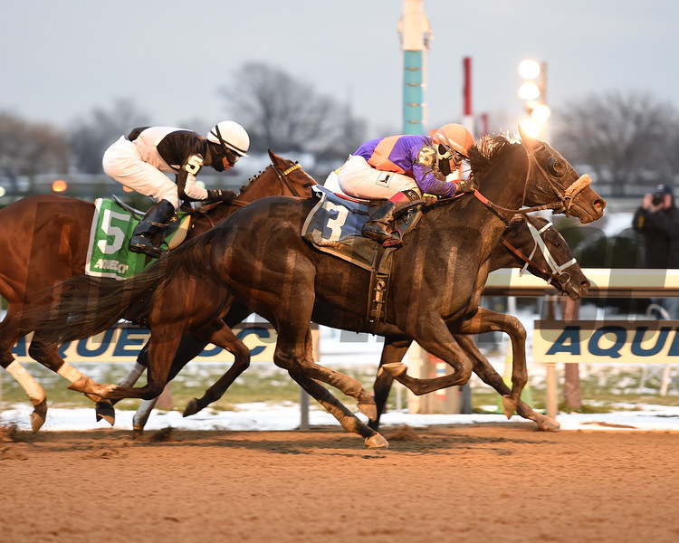Aunt Babe wins the 2017 New York Stallion Series Stakes<br /> Coglianese Photos/Chelsea Durand