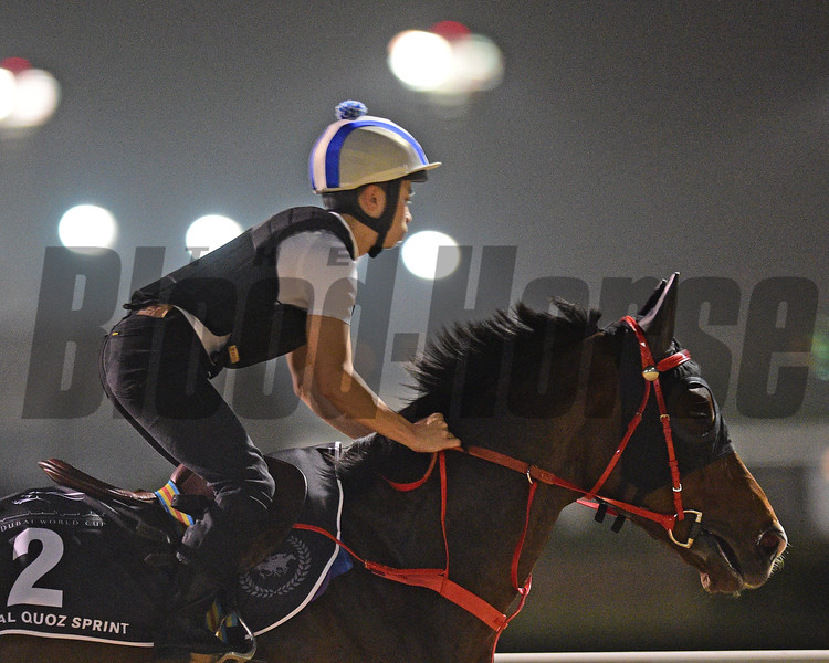 Dubai World Cup -Morning works 3/22/17, photo by Mathea Kelley/Dubai Racing Club<br /> Amazing Kids, Al Quoz Sprint