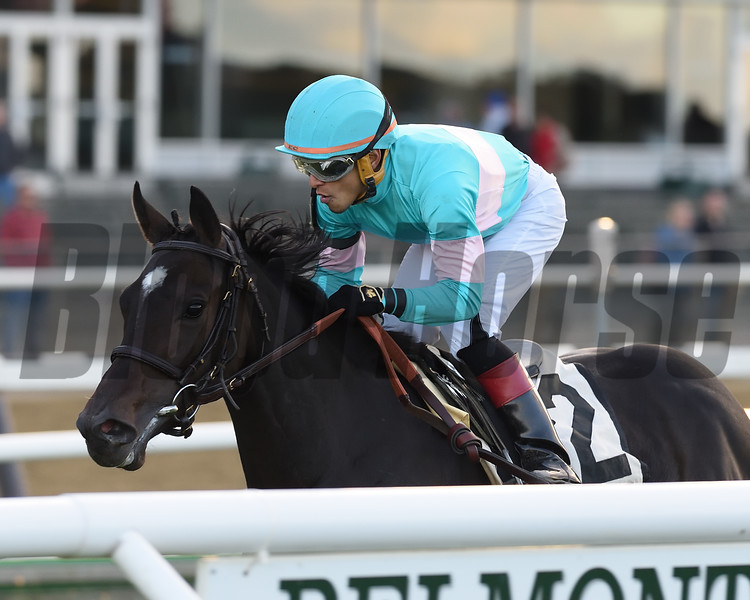 Stella di Camelot wins the 2018 Pebbles Stakes at Belmont Park<br /> Coglianese Photos/Chelsea Durand