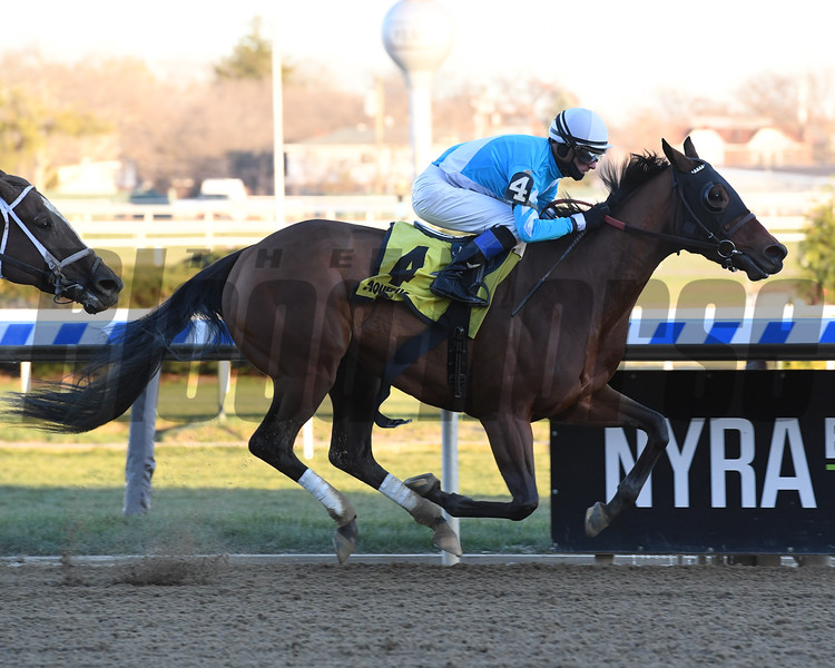 Blamed wins the 2018 Comely Stakes at Aqueduct<br /> Coglianese Photos/Susie Raisher