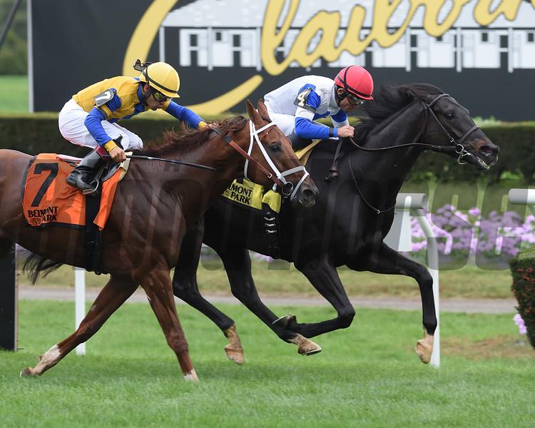 Blacktype wins 2018 Knickerbocker Stakes at Belmont Park. Photo: Coglianese Photos