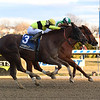 Mr. Buff wins the 2018 Alex M. Robb Stakes at Aqueduct<br /> Coglianese Photos/Susie Raisher
