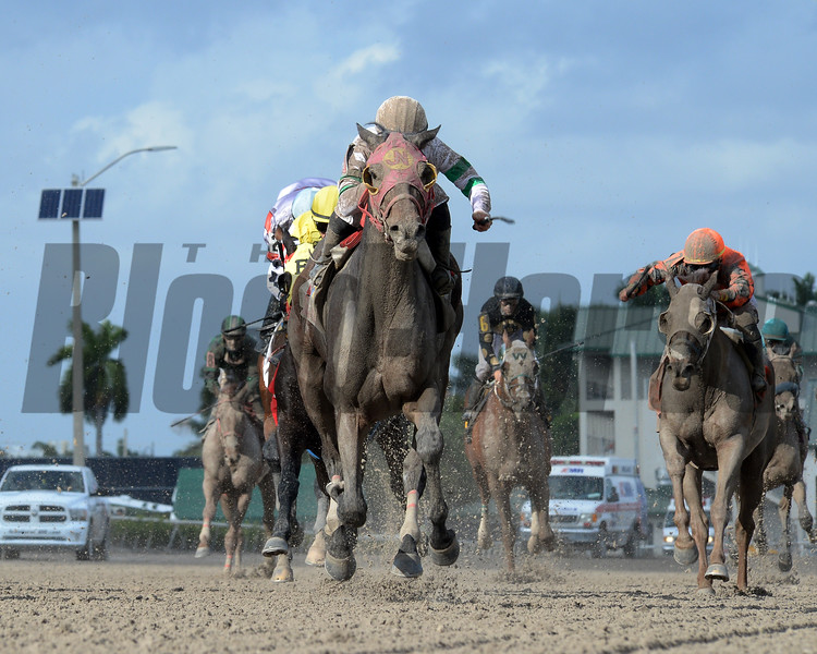 Salsa's Return wins the 2018 Claiming Crown Iron Horse at Gulfstream Park<br /> Coglianese Photos/Leslie Martin