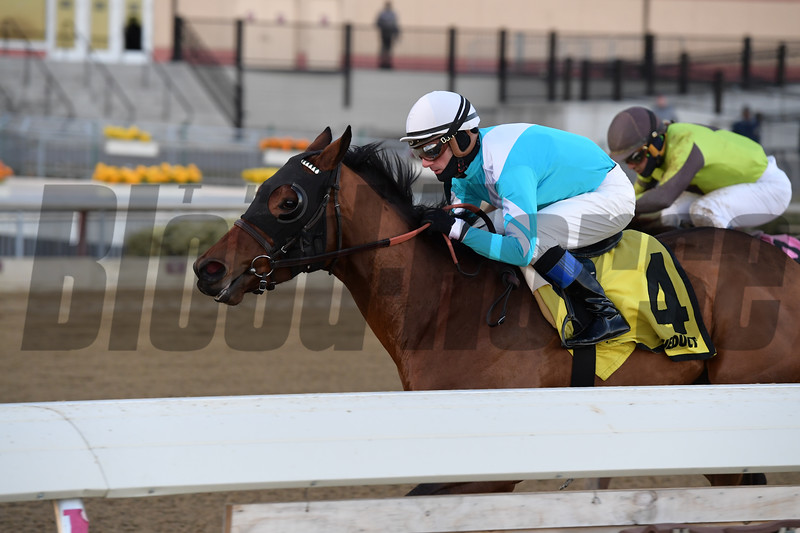 Blamed wins the 2018 Comely Stakes at Aqueduct<br /> Coglianese Photos/Joe Labozzetta