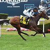 Tesora wins the 2018 Christiecat Stakes<br /> Coglianese Photos