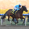 Blamed wins the 2018 Comely Stakes at Aqueduct<br /> Coglianese Photos