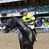 Forty Under wins the 2018 Pilgrim Stakes at Belmont Park. Photo: Coglianese Photos/Joe Labozzetta