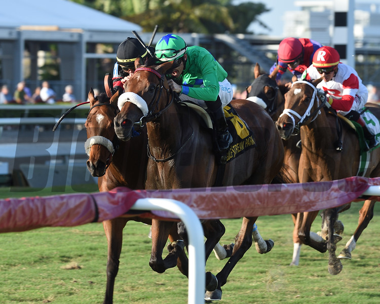 Si Que Es Buena wins the 2018 Via Borghese Stakes at Gulfstream Park<br /> Coglianese Photos/Kenny Martin