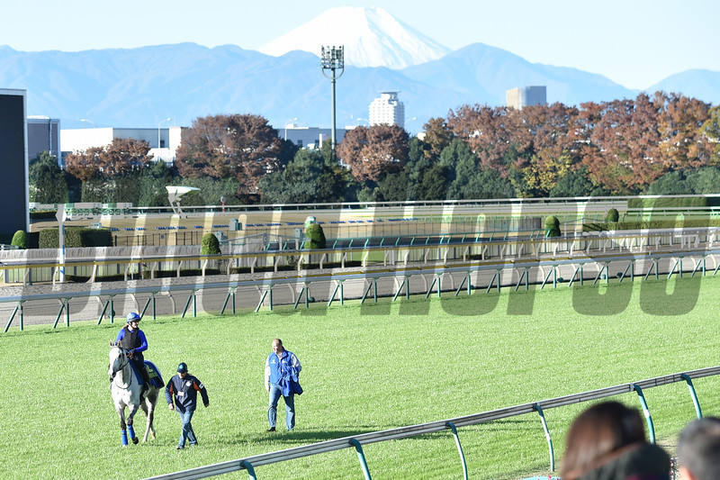 Thundering Blue in early morning training at Tokyo Race Course, on Friday, November 23rd, 2018. It was a beautiful morning with Mt. Fuji as a backdrop.<br /> Katsumi Saito Photo