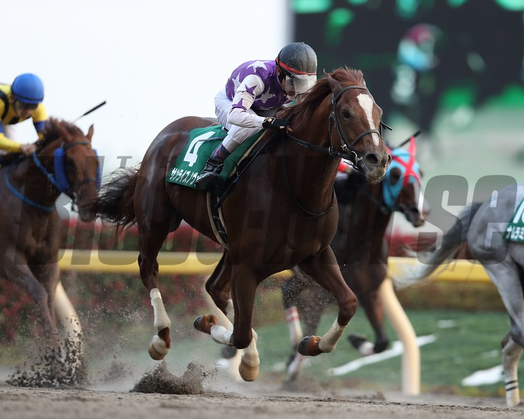 Sunrise Nova wins 2018 Musashino Stakes. Photo: Masakazu Takahashi