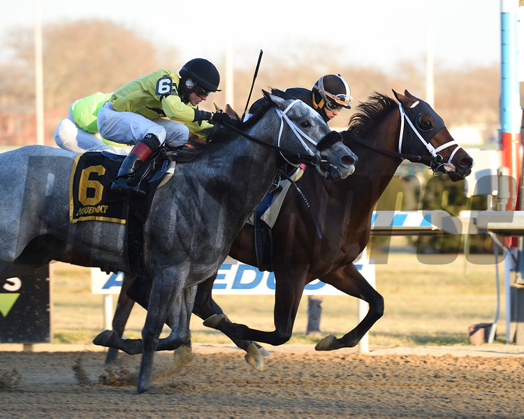 Recruiting Ready wins the Gravesend Stakes at Aqueduct Sunday, December 23, 2018. Photo: Coglianese Photos/Susie Raisher