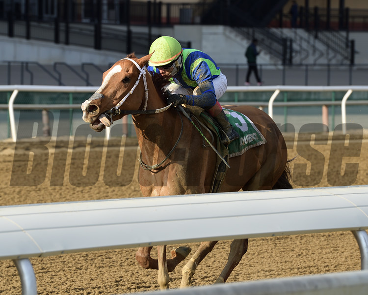 Vertical Oak wins the 2018 Garland of Roses Stakes at Aqueduct<br /> Coglianese Photos/Joe Labozzetta