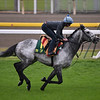 Capri with Ryan Moore, and Thundering Blue in early morning of Thursday, November 22nd, 2018 at Tokyo Race Course  <br /> Katsumi Saito Photo