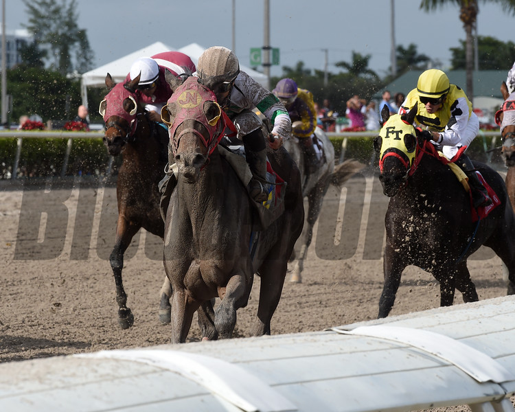 Salsa's Return wins the 2018 Claiming Crown Iron Horse at Gulfstream Park<br /> Coglianese Photos/Kenny Martin
