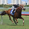 Pay Any Price wins the 2018 Tamiami Handicap<br /> Coglianese Photos/Lauren King