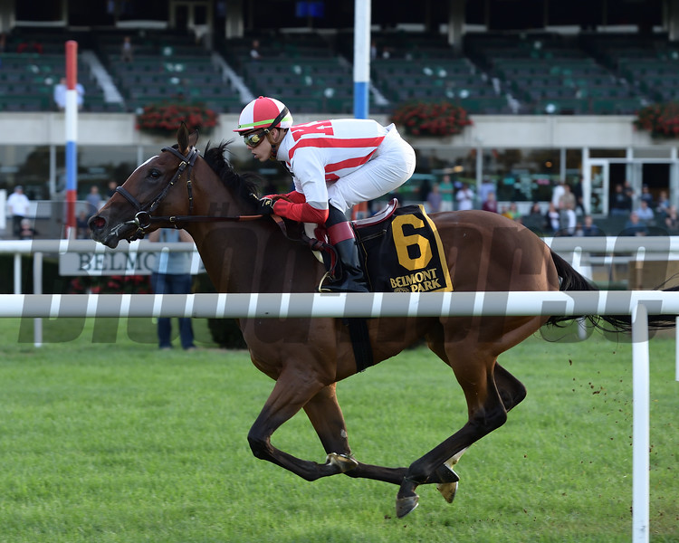 Newspaperofrecord wins 2018 Miss Grillo Stakes at Belmont Park. Coglianese Photos/Joe Labozzetta