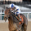 Espresso Shot wins the 2018 East View Stakes at Aqueduct.<br /> Coglianese Photos/Chelsea Durand