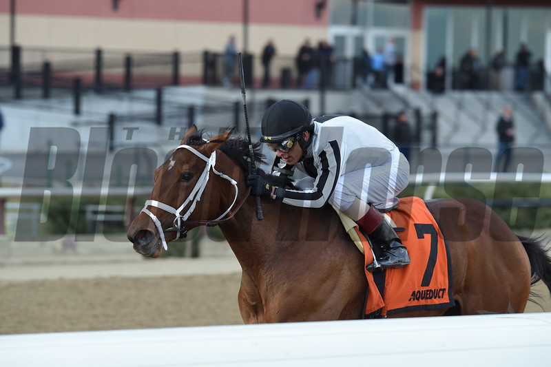 South of France wins 2018 Tepin Stakes at Aqueduct. Photo: Coglianese Photos/Chelsea Durand