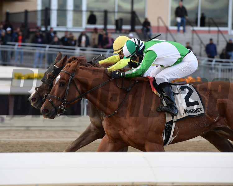 Mr. Buff wins the 2018 Alex M. Robb Stakes at Aqueduct<br /> Coglianese Photos/Joe Labozzetta