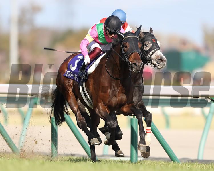 Mr Melody wins 2019 Takamatsunomiya Kinen. Photo: Masakazu Takahashi