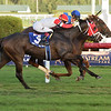 Red Knight wins the 2018 H. Allen Jerkens Stakes at Gulfstream Park<br /> Coglianese Photos/Leslie Martin