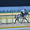 Capri in early morning training on beautiful morning of Friday, November 23rd, 2018 at Tokyo Race Course<br /> Katsumi Saito Photo