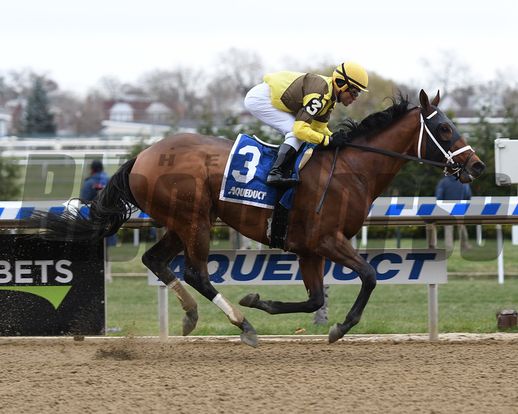 Plainsman wins the 2018 Discovery Stakes at Aqueduct<br /> Coglianese Photos/Annette Jasko