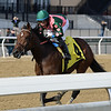 Positive Spirit wins the 2018 Demoiselle Stakes at Aqueduct<br /> Coglianese Photos/Joe Labozzetta