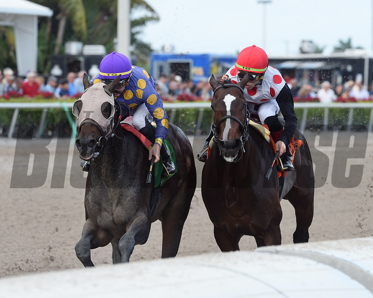 Garter and Tie wins the 2018 Smooth Air Stakes at Gulfstream Park<br /> Coglianese Photos/Kenny Martin