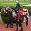 Capri - Morning - Tokyo Race Course - 112218<br /> Katsumi Saito Photo