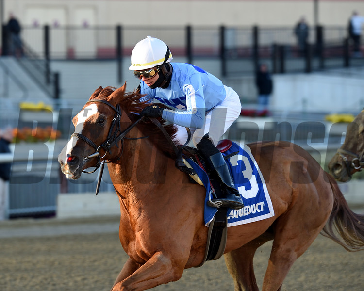 Sassy Agnes wins the 2018 Key Cents Stakes at Aqueduct<br /> Coglianese Photos/Chelsea Durand
