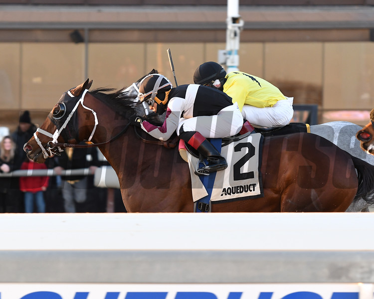 Recruiting Ready wins the Gravesend Stakes at Aqueduct Sunday, December 23, 2018. Photo: Coglianese Photos/Annette Jasko