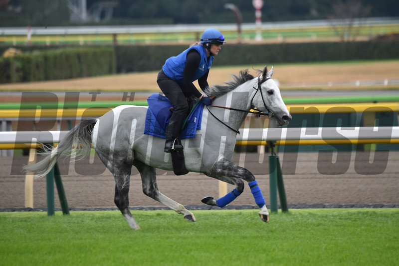 Thundering Blue - Morning - Tokyo Race Course - 112218<br /> Katsumi Saito Photo