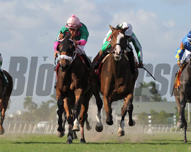 Archer Road wins 2018 Mr. Steele Stakes at Gulfstream Park. Photo: Coglianese Photos/Leslie Martin