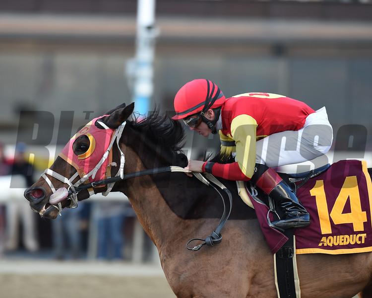 Yorkiepoo Princess wins 2018 Autumn Days Stakes at Aqueduct. Photo: Coglianese Photos/Chelsea Durand