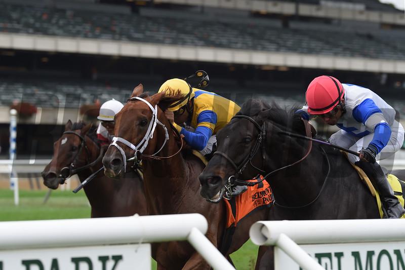 Blacktype wins 2018 Knickerbocker Stakes at Belmont Park. Photo: Coglianese Photos/Chelsea Durand
