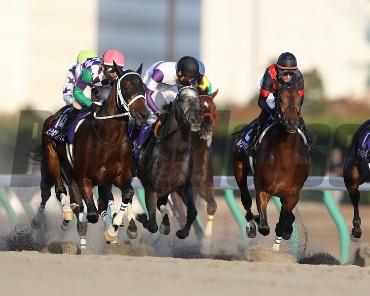 Le Vent Se Leve under Mirco Demuro wins the Champions Cup (G1) at Chukyo Racecourse on December 2, 2018.