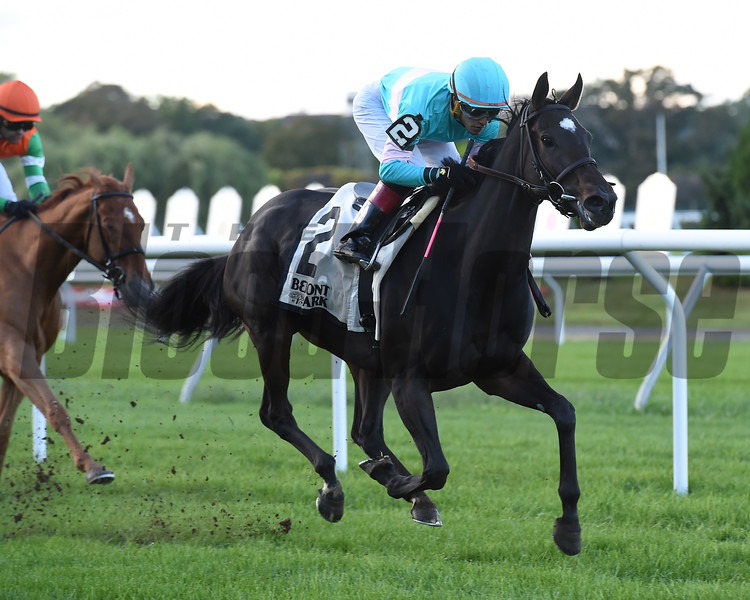 Stella di Camelot wins the 2018 Pebbles Stakes at Belmont Park<br /> Coglianese Photos
