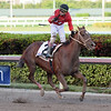 Jala Jala wins the 2018 Copa Confraternidad del Caribe at Gulfstream Park<br /> Coglianese Photos
