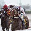 Sir Anthony wins the 2018 Harlan's Holiday at Gulfstream Park<br /> Coglianese Photos/Kenny Martin