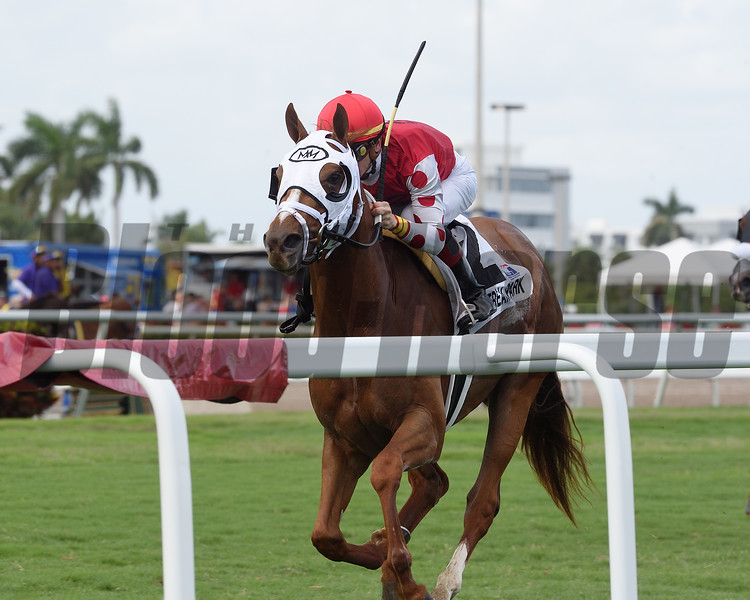 Henley's Joy wins the 2018 Pulpit Stakes at Gulfstream Park<br /> Coglianese Photos/Kenny Martin